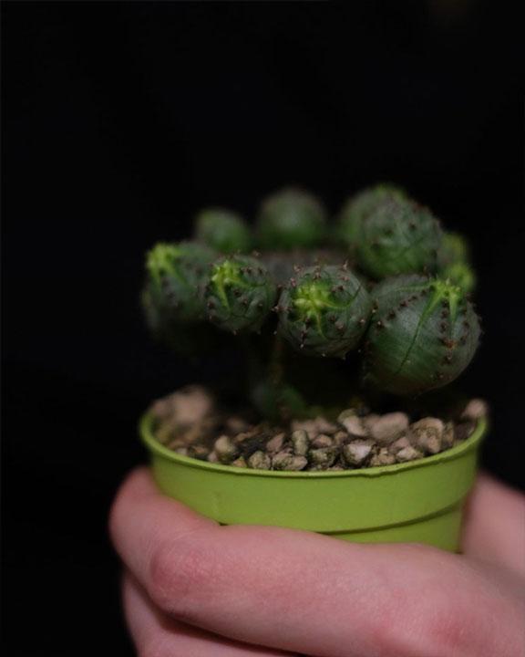 plantropic-1