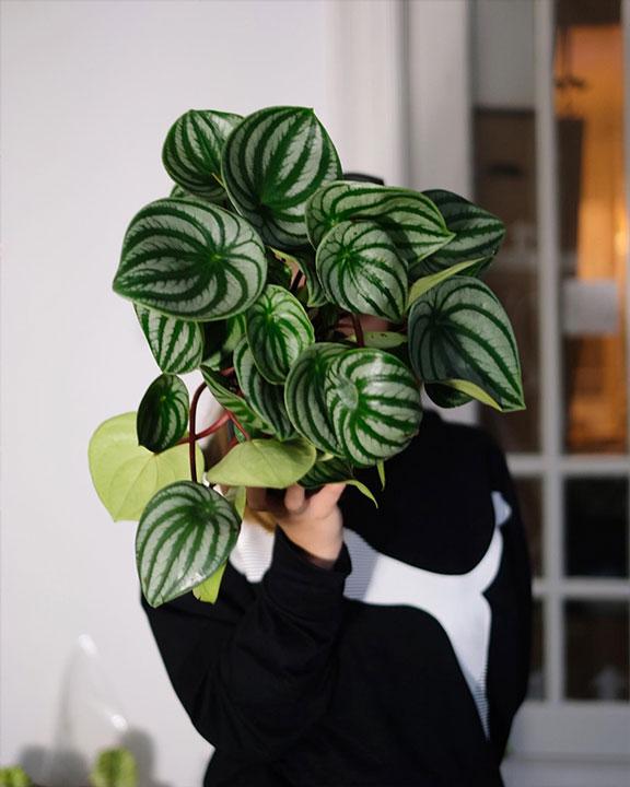 plantropic-3
