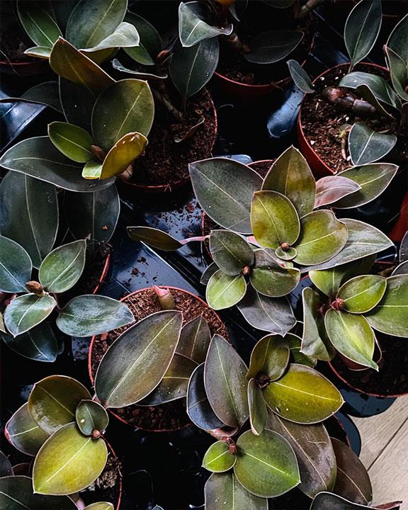 plantropic-4